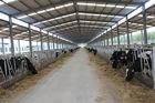 オートメーションおよび衛生前作られた鋼鉄構造牛舎組み立てシステム